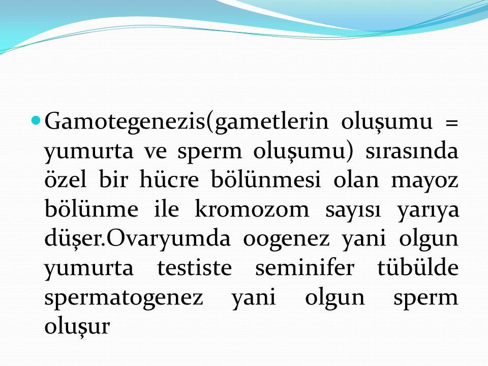 Gamotegenezis(gametlerin oluşumu = yumurta ve sperm oluşumu) sırasında özel bir hücre bölünmesi olan mayoz bölünme ile kromozom sayısı yarıya düşer.Ov