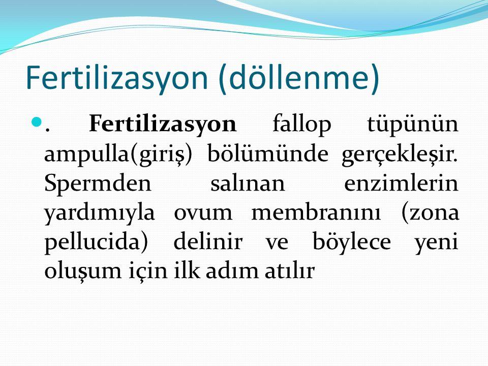 Fertilizasyon (döllenme). Fertilizasyon fallop tüpünün ampulla(giriş) bölümünde gerçekleşir. Spermden salınan enzimlerin yardımıyla ovum membranını (z