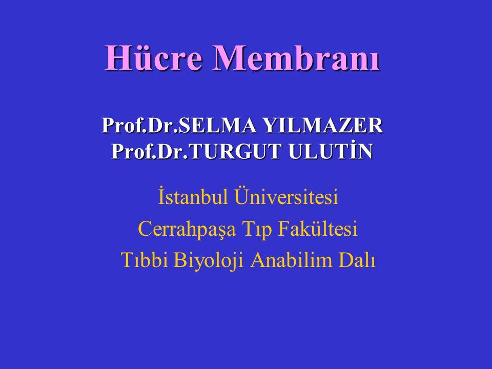 Hücre Membranı Prof.Dr.SELMA YILMAZER Prof.Dr.TURGUT ULUTİN İstanbul Üniversitesi Cerrahpaşa Tıp Fakültesi Tıbbi Biyoloji Anabilim Dalı