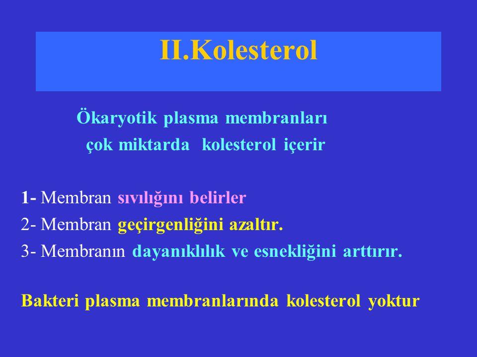II.Kolesterol Ökaryotik plasma membranları çok miktarda kolesterol içerir 1- Membran sıvılığını belirler 2- Membran geçirgenliğini azaltır. 3- Membran