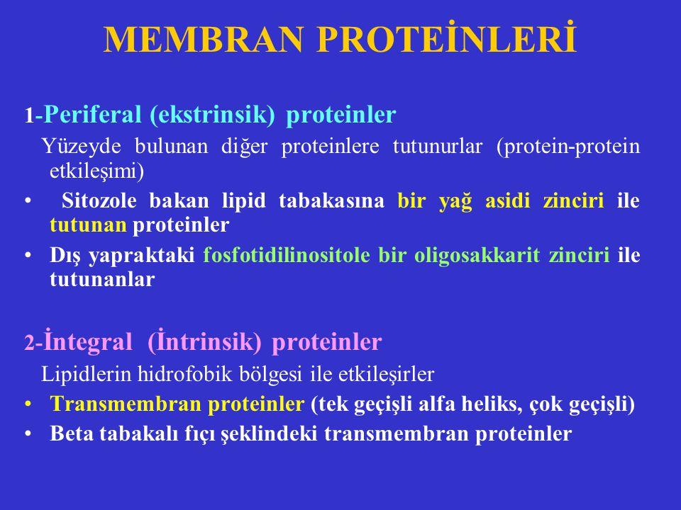 1- Periferal (ekstrinsik) proteinler Yüzeyde bulunan diğer proteinlere tutunurlar (protein-protein etkileşimi) Sitozole bakan lipid tabakasına bir yağ