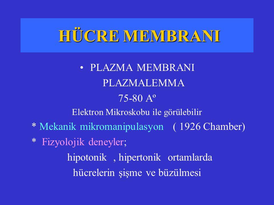 HÜCRE MEMBRANI PLAZMA MEMBRANI PLAZMALEMMA 75-80 Aº Elektron Mikroskobu ile görülebilir * Mekanik mikromanipulasyon ( 1926 Chamber) * Fizyolojik deney