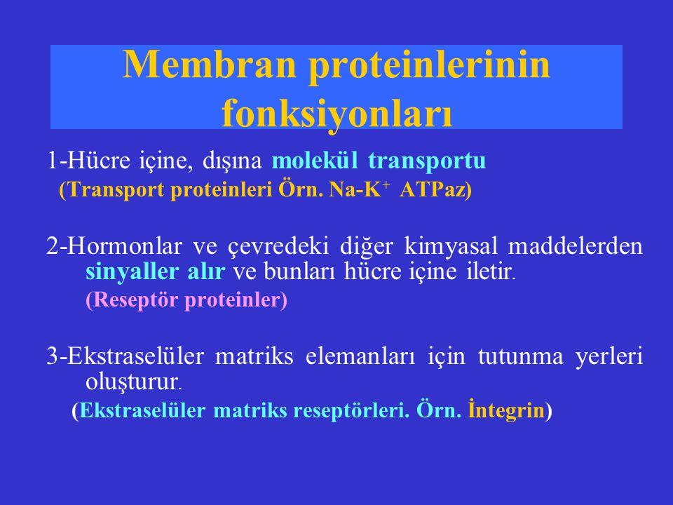 Membran proteinlerinin fonksiyonları 1-Hücre içine, dışına molekül transportu (Transport proteinleri Örn. Na-K + ATPaz) 2-Hormonlar ve çevredeki diğer