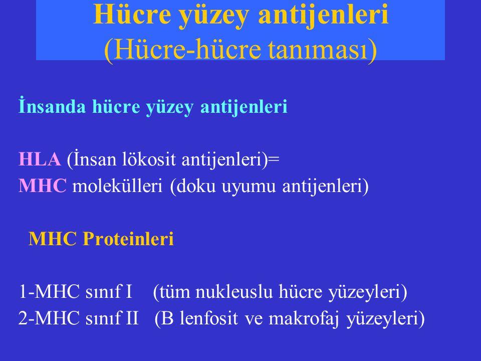 İnsanda hücre yüzey antijenleri HLA (İnsan lökosit antijenleri)= MHC molekülleri (doku uyumu antijenleri) MHC Proteinleri 1-MHC sınıf I (tüm nukleuslu