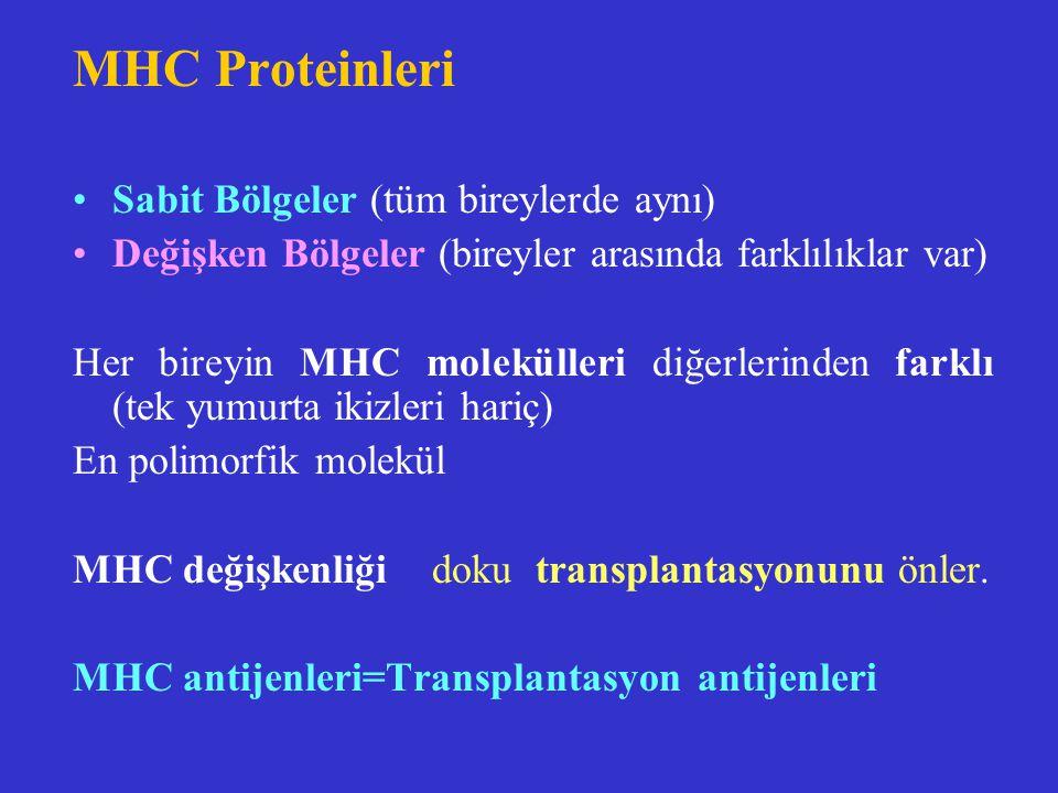 MHC Proteinleri Sabit Bölgeler (tüm bireylerde aynı) Değişken Bölgeler (bireyler arasında farklılıklar var) Her bireyin MHC molekülleri diğerlerinden