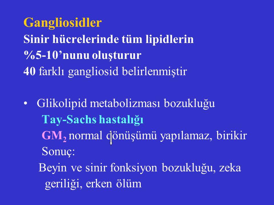 Gangliosidler Sinir hücrelerinde tüm lipidlerin %5-10'nunu oluşturur 40 farklı gangliosid belirlenmiştir Glikolipid metabolizması bozukluğu Tay-Sachs