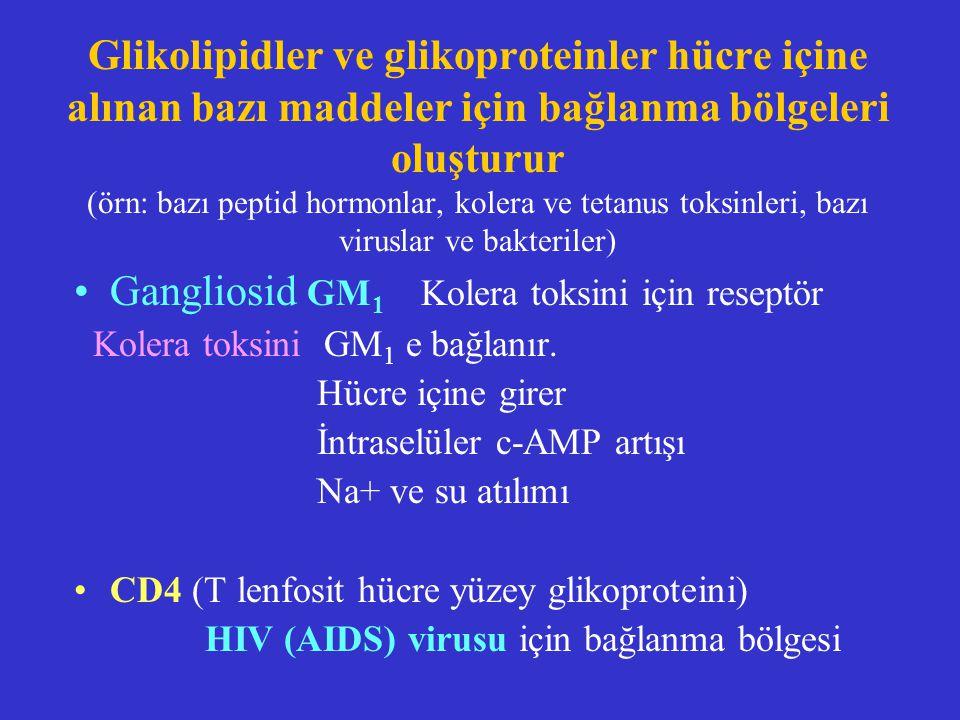 Glikolipidler ve glikoproteinler hücre içine alınan bazı maddeler için bağlanma bölgeleri oluşturur (örn: bazı peptid hormonlar, kolera ve tetanus tok