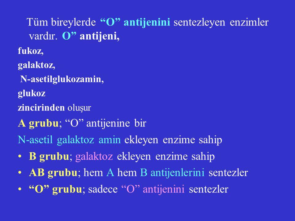 """Tüm bireylerde """"O"""" antijenini sentezleyen enzimler vardır. O"""" antijeni, fukoz, galaktoz, N-asetilglukozamin, glukoz zincirinden oluşur A grubu; """"O"""" an"""