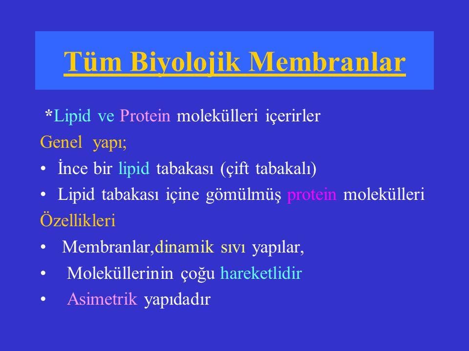 Lipid-protein oranı değişkendir Myelin membranı ; %82 lipid %18 protein Mitokondri iç membranı; %25 lipid %75 protein Lipidler membranın esas yapısal elemanıdır Çift tabaka halinde dizilmiş fosfolipidler membranın sınırlayıcı yapısını oluşturur Seçici geçirgen bariyer (Küçük hidrofobik gazlar; O 2, CO 2, N 2, küçük yüksüz moleküller; su, etanol, gliserol, üre diffüzyonla geçer)