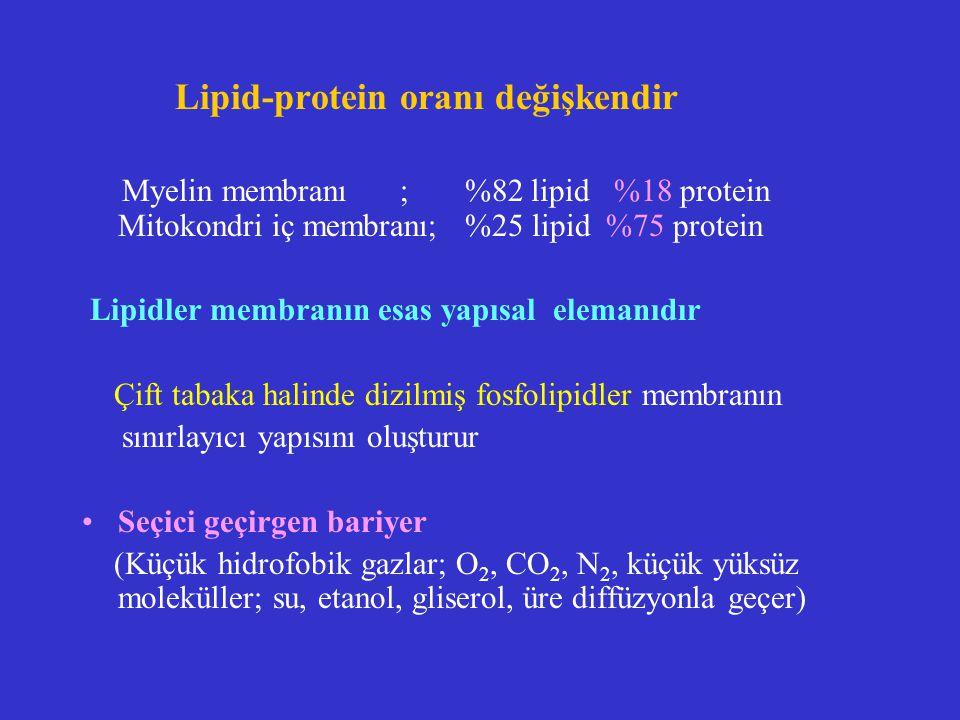 Glikolipidler (Dış yapraktaki lipidlerin %5 i) Tüm hayvan hücre membranlarında ve bazı iç membranlarda bulunur Sinir hücrelerinde ve beyinde çok bulunur *Galaktoserebrosit (Myelin %40) *Gangliosidler (En kompleks glikolipid): Bir veya daha çok sialikasit= N-asetil nöraminik asit NANA içerir, Membrana (- ) yük verir