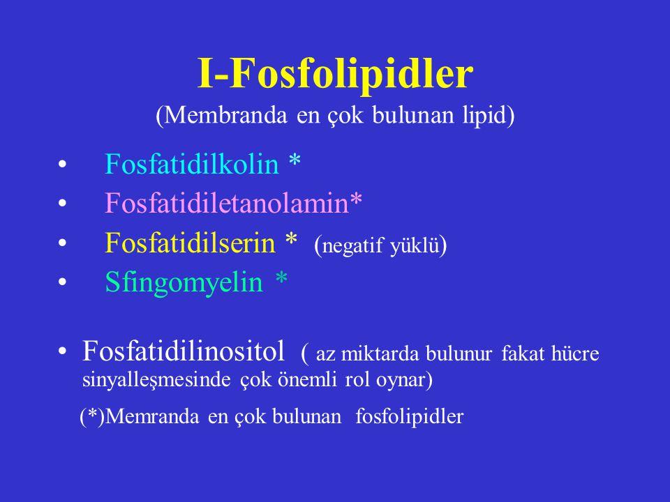 I-Fosfolipidler (Membranda en çok bulunan lipid) Fosfatidilkolin * Fosfatidiletanolamin* Fosfatidilserin * ( negatif yüklü ) Sfingomyelin * Fosfatidil