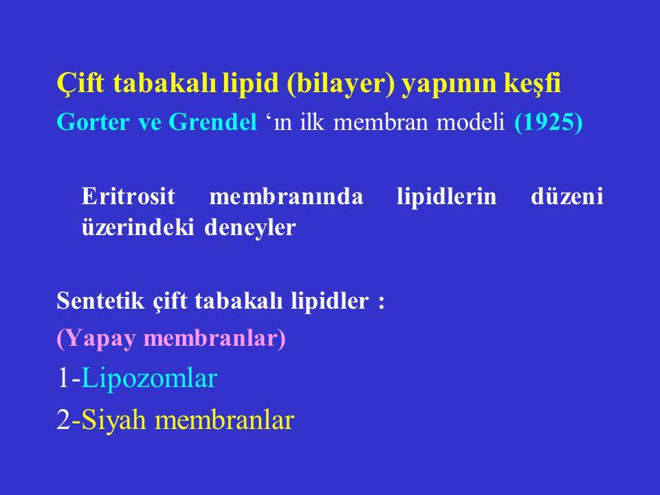 Lipid asimetrisi 2 tabaka farklı fosfolipid içeriğine sahiptir.