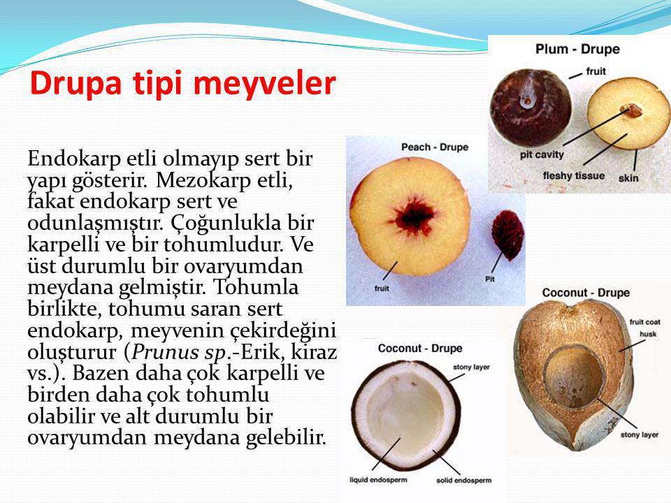 Drupa tipi meyveler Endokarp etli olmayıp sert bir yapı gösterir. Mezokarp etli, fakat endokarp sert ve odunlaşmıştır. Çoğunlukla bir karpelli ve bir