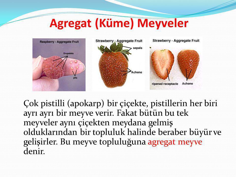 Agregat (Küme) Meyveler Çok pistilli (apokarp) bir çiçekte, pistillerin her biri ayrı ayrı bir meyve verir. Fakat bütün bu tek meyveler aynı çiçekten