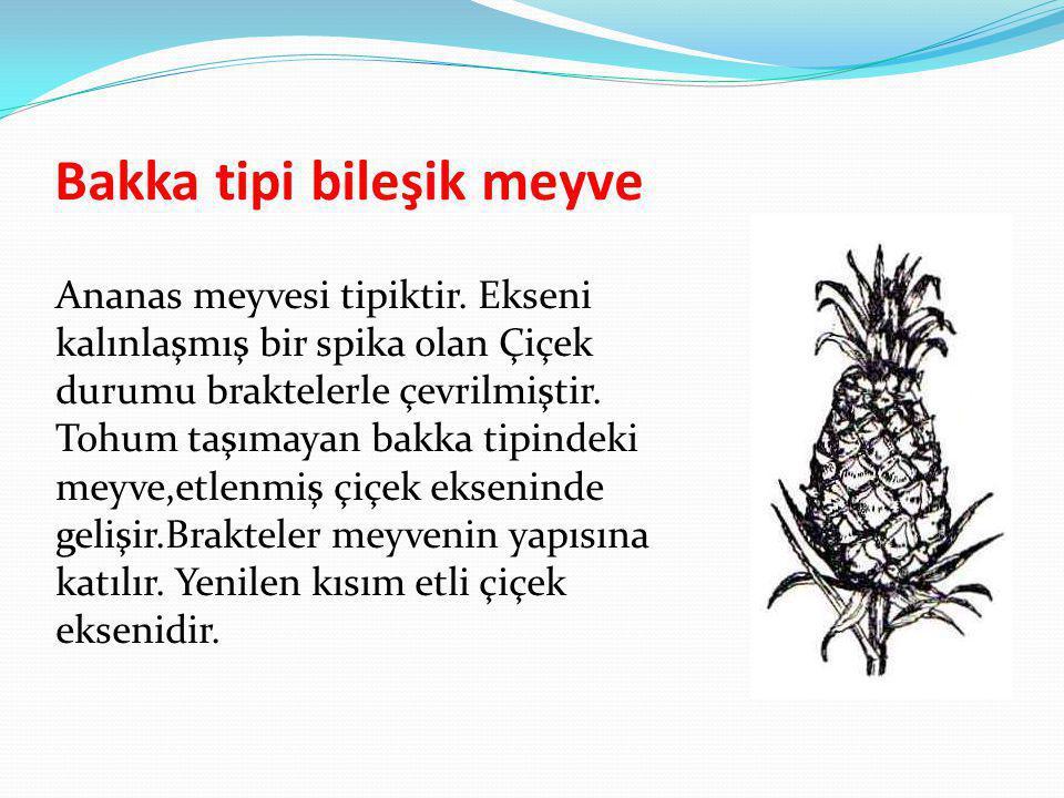Bakka tipi bileşik meyve Ananas meyvesi tipiktir. Ekseni kalınlaşmış bir spika olan Çiçek durumu braktelerle çevrilmiştir. Tohum taşımayan bakka tipin