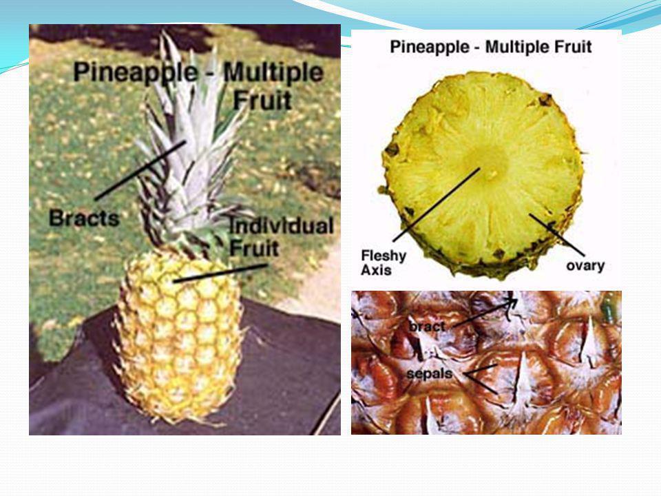 Drupa tipindeki bileşik meyve Sinkonium (incirsi meyve) ve Sorosis (dutsu meyve) olarak iki farklı tip gösterir.