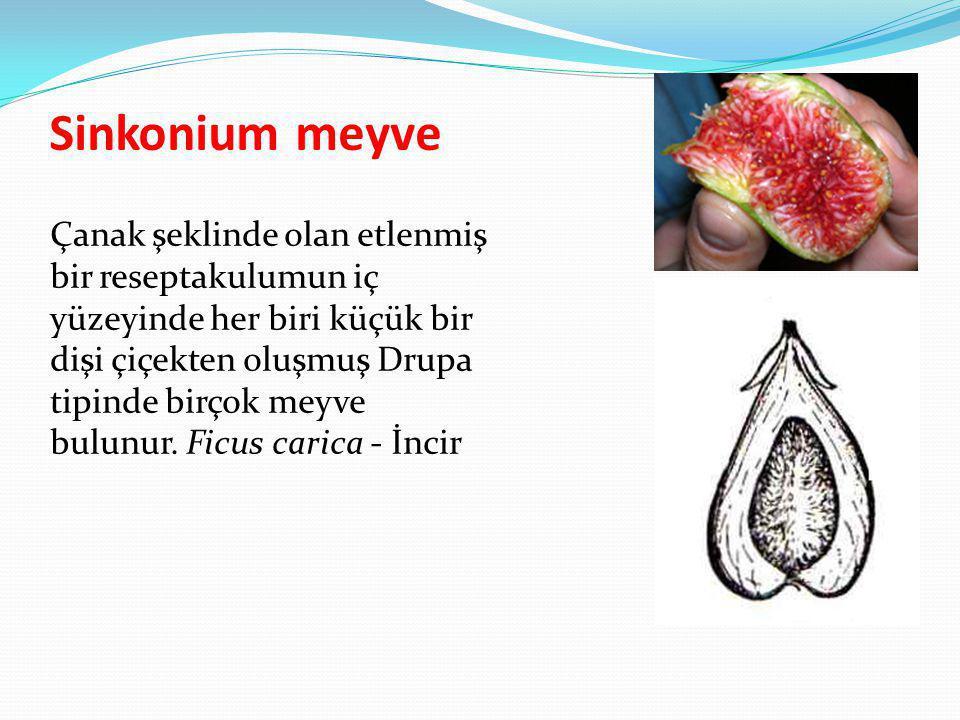 Sinkonium meyve Çanak şeklinde olan etlenmiş bir reseptakulumun iç yüzeyinde her biri küçük bir dişi çiçekten oluşmuş Drupa tipinde birçok meyve bulun