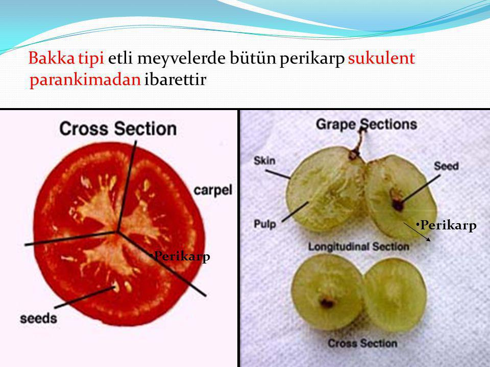 Bakka tipi etli meyvelerde bütün perikarp sukulent parankimadan ibarettir Perikarp
