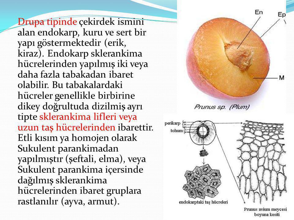Drupa tipinde çekirdek ismini alan endokarp, kuru ve sert bir yapı göstermektedir (erik, kiraz). Endokarp sklerankima hücrelerinden yapılmış iki veya