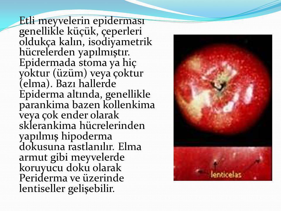 Etli meyvelerin epiderması genellikle küçük, çeperleri oldukça kalın, isodiyametrik hücrelerden yapılmıştır. Epidermada stoma ya hiç yoktur (üzüm) vey