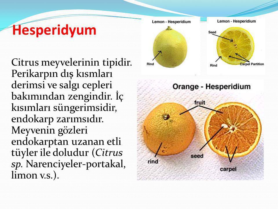 Hesperidyum Citrus meyvelerinin tipidir. Perikarpın dış kısmları derimsi ve salgı cepleri bakımından zengindir. İç kısımları süngerimsidir, endokarp z