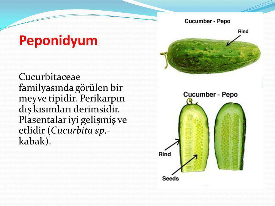Peponidyum Cucurbitaceae familyasında görülen bir meyve tipidir. Perikarpın dış kısımları derimsidir. Plasentalar iyi gelişmiş ve etlidir (Cucurbita s