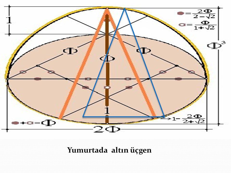 Yumurtada altın üçgen