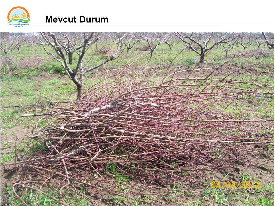 37 Mevcut Durum