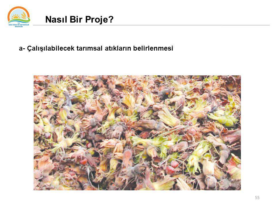 55 Nasıl Bir Proje? a- Çalışılabilecek tarımsal atıkların belirlenmesi