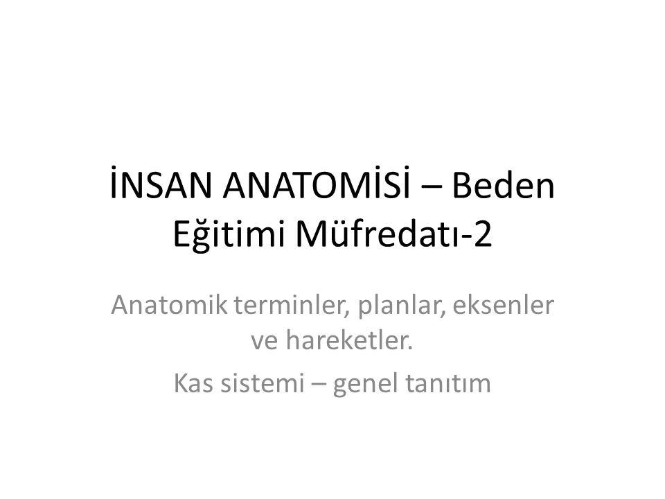 İNSAN ANATOMİSİ – Beden Eğitimi Müfredatı-2 Anatomik terminler, planlar, eksenler ve hareketler. Kas sistemi – genel tanıtım