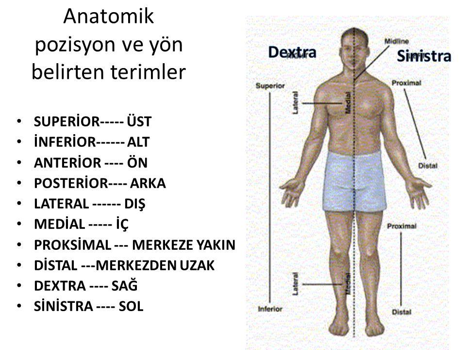 Anatomik pozisyon ve yön belirten terimler SUPERİOR----- ÜST İNFERİOR------ ALT ANTERİOR ---- ÖN POSTERİOR---- ARKA LATERAL ------ DIŞ MEDİAL ----- İÇ