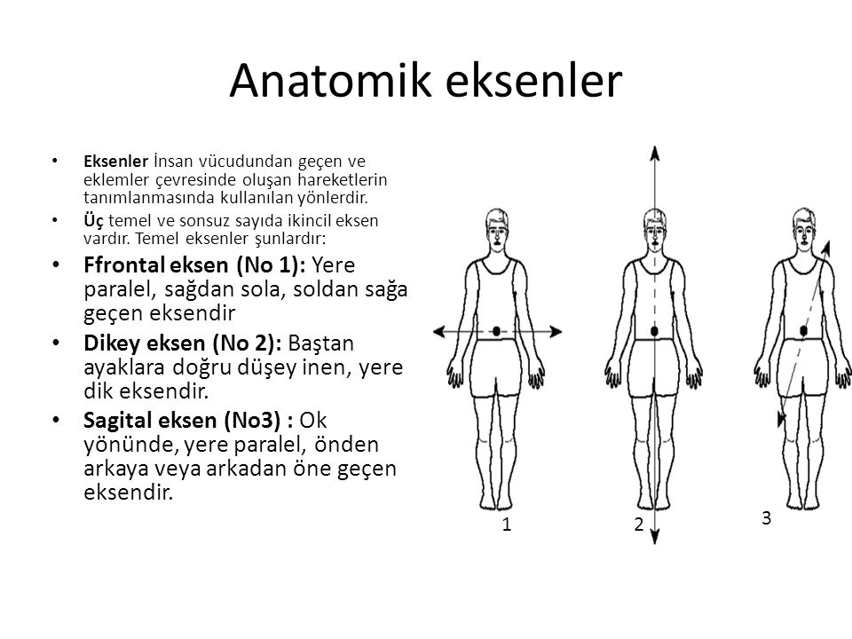 Anatomik eksenler Eksenler İnsan vücudundan geçen ve eklemler çevresinde oluşan hareketlerin tanımlanmasında kullanılan yönlerdir. Üç temel ve sonsuz