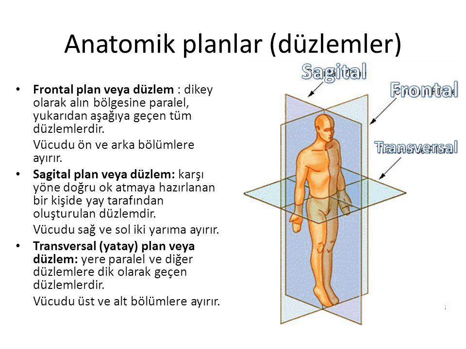 Anatomik planlar (düzlemler) Frontal plan veya düzlem : dikey olarak alın bölgesine paralel, yukarıdan aşağıya geçen tüm düzlemlerdir. Vücudu ön ve ar