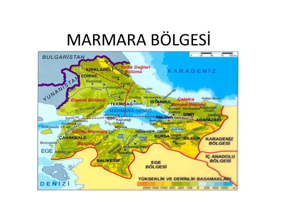 1)BESİN(GIDA)SANAYİ: Tahıllar,sebze-meyve,et ve süt ürünleri işleyen ve Türkiye'de en yaygın olan sanayi koludur.