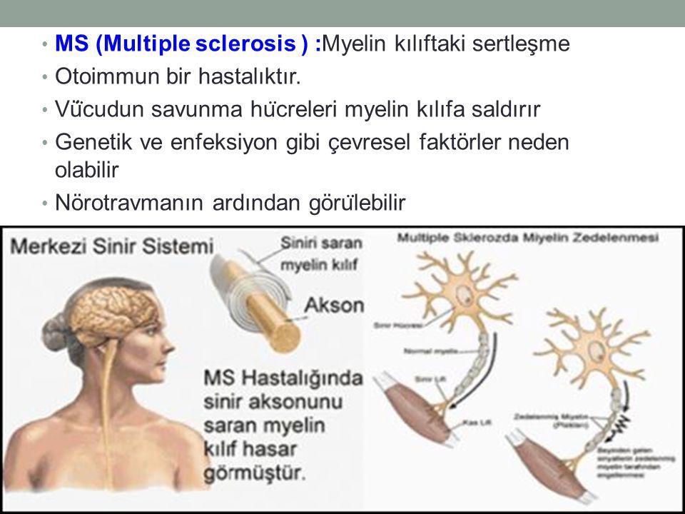 MS (Multiple sclerosis ) :Myelin kılıftaki sertleşme Otoimmun bir hastalıktır.