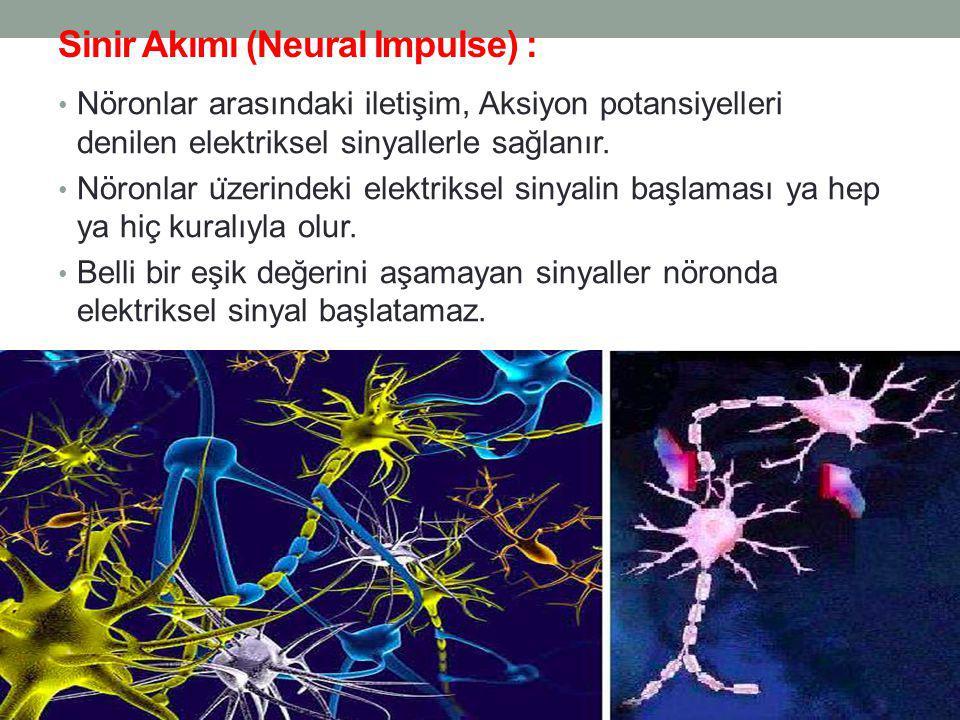 Sinir Akımı (Neural Impulse) : Nöronlar arasındaki iletişim, Aksiyon potansiyelleri denilen elektriksel sinyallerle sağlanır.