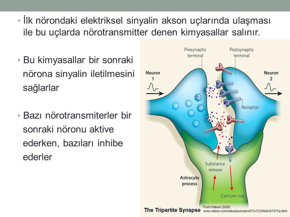İlk nörondaki elektriksel sinyalin akson uçlarında ulaşması ile bu uçlarda nörotransmitter denen kimyasallar salınır.
