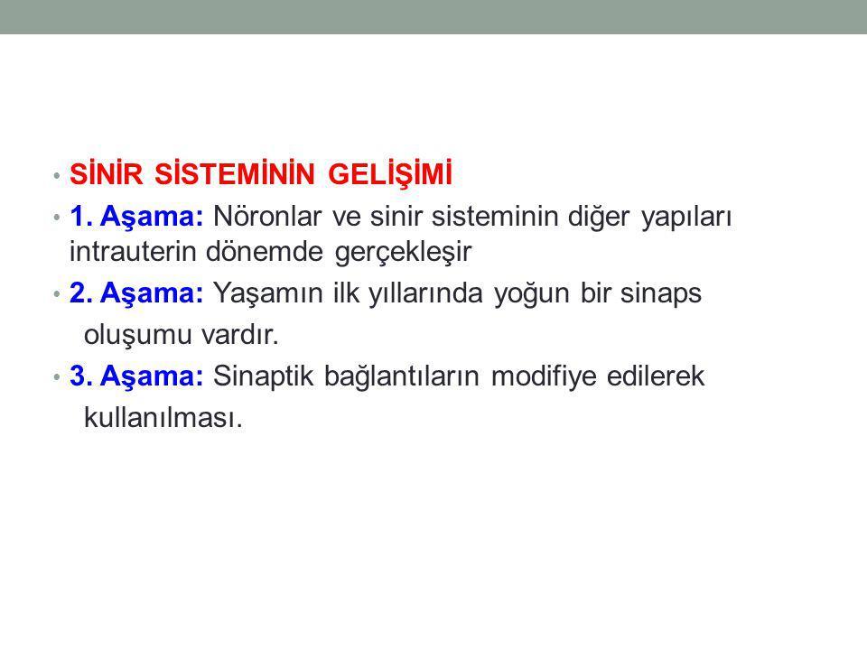 SİNİR SİSTEMİNİN GELİŞİMİ 1.