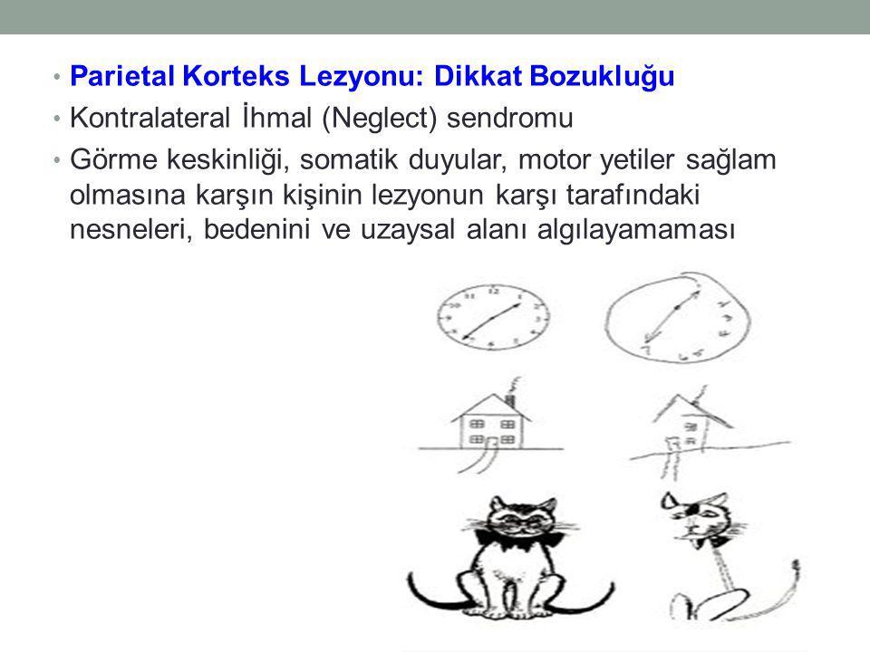 Parietal Korteks Lezyonu: Dikkat Bozukluğu Kontralateral İhmal (Neglect) sendromu Görme keskinliği, somatik duyular, motor yetiler sağlam olmasına karşın kişinin lezyonun karşı tarafındaki nesneleri, bedenini ve uzaysal alanı algılayamaması