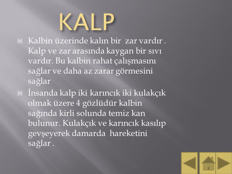 KALP KALP  Kalbin üzerinde kalın bir zar vardır.Kalp ve zar arasında kaygan bir sıvı vardır.