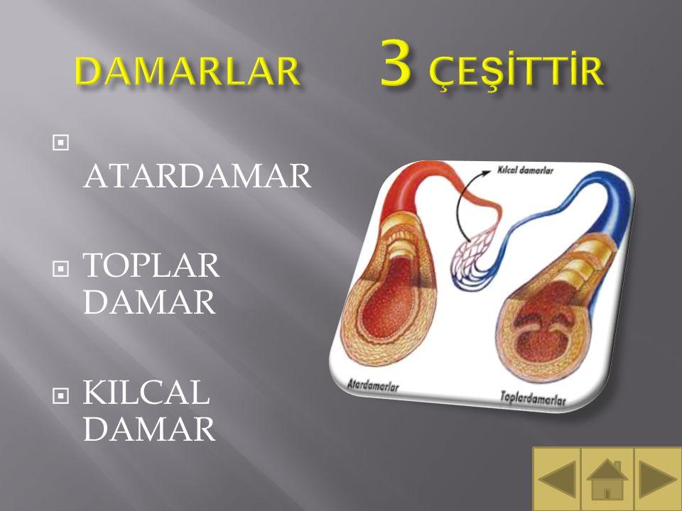  Vücudun tek sıvı dokusudur.Kalp yardımı ile damarlar içinde hareket eder.