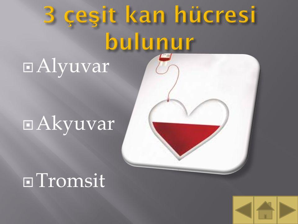  Alyuvar  Akyuvar  Tromsit