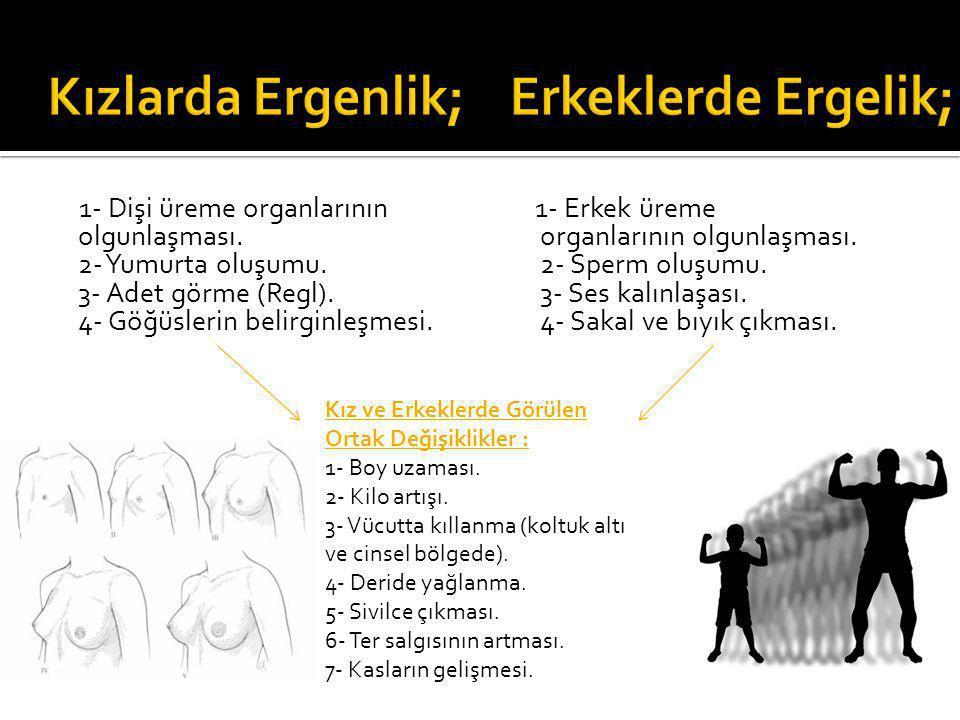 1- Dişi üreme organlarının olgunlaşması. 2- Yumurta oluşumu. 3- Adet görme (Regl). 4- Göğüslerin belirginleşmesi. 1- Erkek üreme organlarının olgunlaş