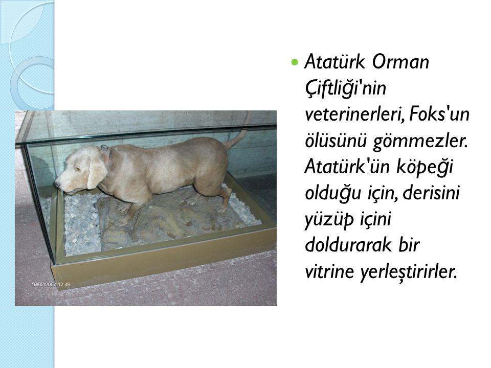 Atatürk Orman Çiftli ğ i'nin veterinerleri, Foks'un ölüsünü gömmezler. Atatürk'ün köpe ğ i oldu ğ u için, derisini yüzüp içini doldurarak bir vitrine