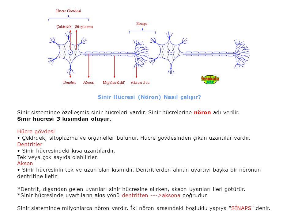 Sinir Hücresi (Nöron) Nasıl çalışır? Sinir sisteminde özelleşmiş sinir hücreleri vardır. Sinir hücrelerine nöron adı verilir. Sinir hücresi 3 kısımdan
