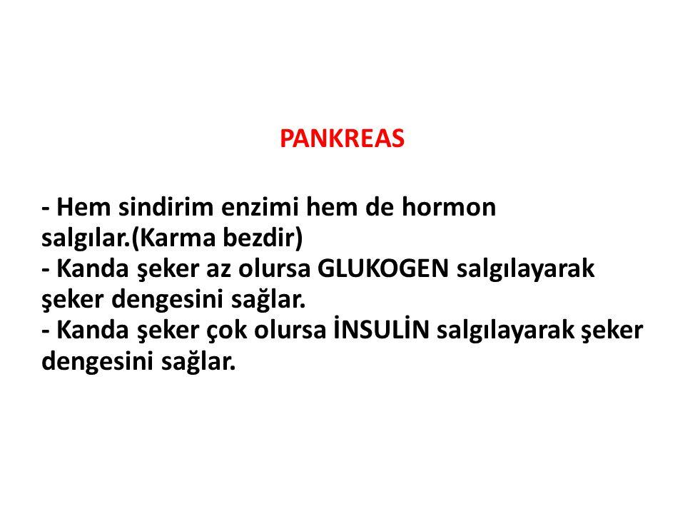 PANKREAS - Hem sindirim enzimi hem de hormon salgılar.(Karma bezdir) - Kanda şeker az olursa GLUKOGEN salgılayarak şeker dengesini sağlar. - Kanda şek