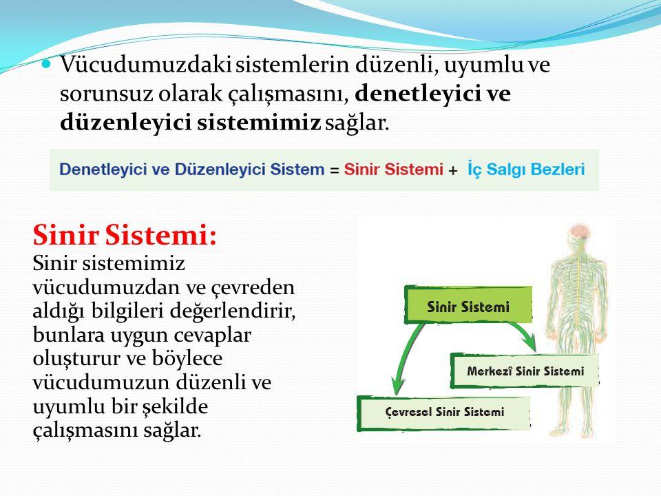 Vücudumuzdaki sistemlerin düzenli, uyumlu ve sorunsuz olarak çalışmasını, denetleyici ve düzenleyici sistemimiz sağlar. Sinir Sistemi: Sinir sistemimi