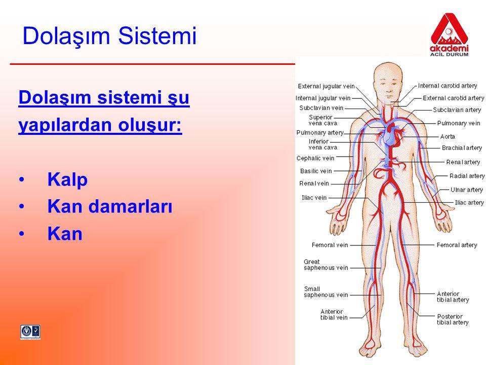 Dolaşım sistemi şu yapılardan oluşur: Kalp Kan damarları Kan Dolaşım Sistemi
