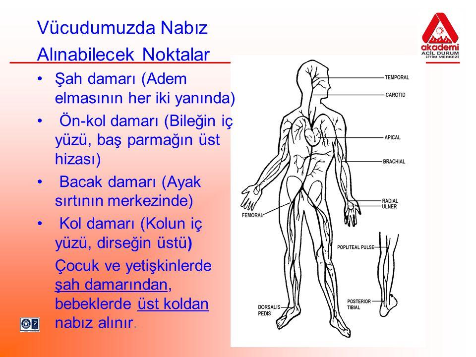 Vücudumuzda Nabız Alınabilecek Noktalar Şah damarı (Adem elmasının her iki yanında) Ön-kol damarı (Bileğin iç yüzü, baş parmağın üst hizası) Bacak dam