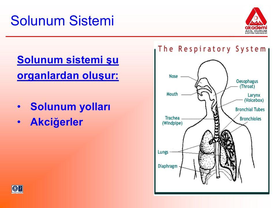 Solunum Sistemi Solunum sistemi şu organlardan oluşur: Solunum yolları Akciğerler